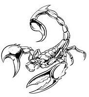 Scorpion Tat Tattoos